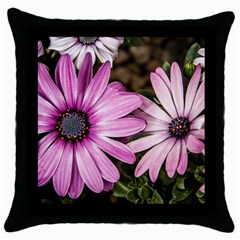 Beautiful Colourful African Daisies  Throw Pillow Cases (Black)