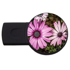 Beautiful Colourful African Daisies  USB Flash Drive Round (1 GB)
