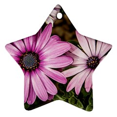 Beautiful Colourful African Daisies  Star Ornament (two Sides)