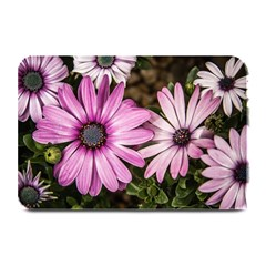 Beautiful Colourful African Daisies  Plate Mats