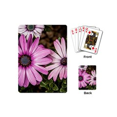 Beautiful Colourful African Daisies  Playing Cards (Mini)