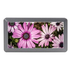 Beautiful Colourful African Daisies  Memory Card Reader (Mini)
