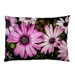 Beautiful Colourful African Daisies  Pillow Cases (two Sides)
