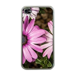Beautiful Colourful African Daisies  Apple iPhone 4 Case (Clear)