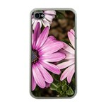 Beautiful Colourful African Daisies  Apple iPhone 4 Case (Clear) Front