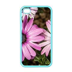 Beautiful Colourful African Daisies  Apple iPhone 4 Case (Color)