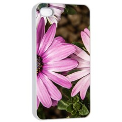 Beautiful Colourful African Daisies  Apple Iphone 4/4s Seamless Case (white)