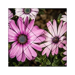 Beautiful Colourful African Daisies  Acrylic Tangram Puzzle (6  x 6 )