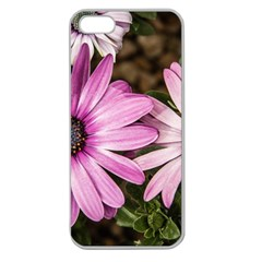 Beautiful Colourful African Daisies  Apple Seamless iPhone 5 Case (Clear)