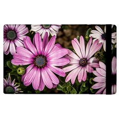 Beautiful Colourful African Daisies  Apple iPad 2 Flip Case