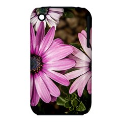 Beautiful Colourful African Daisies  Apple iPhone 3G/3GS Hardshell Case (PC+Silicone)