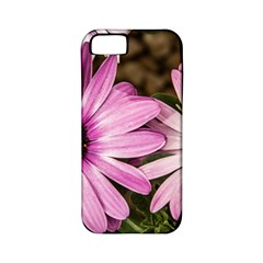 Beautiful Colourful African Daisies  Apple iPhone 5 Classic Hardshell Case (PC+Silicone)