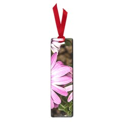 Beautiful Colourful African Daisies  Small Book Marks