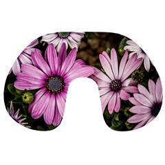 Beautiful Colourful African Daisies  Travel Neck Pillows
