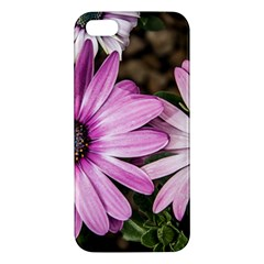 Beautiful Colourful African Daisies  iPhone 5S Premium Hardshell Case