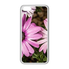 Beautiful Colourful African Daisies  Apple iPhone 5C Seamless Case (White)