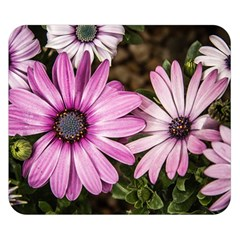 Beautiful Colourful African Daisies  Double Sided Flano Blanket (Small)