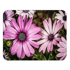 Beautiful Colourful African Daisies  Double Sided Flano Blanket (large)