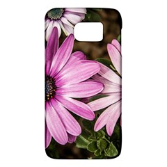 Beautiful Colourful African Daisies  Galaxy S6