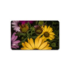 Beautiful Colourful African Daisies  Magnet (Name Card)