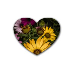 Beautiful Colourful African Daisies  Rubber Coaster (heart)