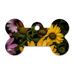 Beautiful Colourful African Daisies  Dog Tag Bone (two Sides)