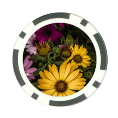 Beautiful Colourful African Daisies  Poker Chip Card Guards