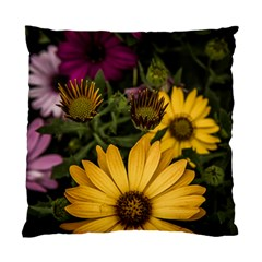 Beautiful Colourful African Daisies  Standard Cushion Case (one Side)