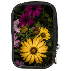 Beautiful Colourful African Daisies  Compact Camera Cases