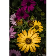 Beautiful Colourful African Daisies  5 5  X 8 5  Notebooks