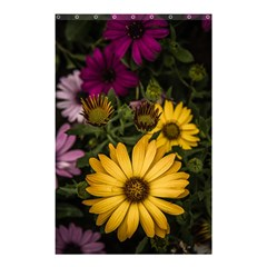 Beautiful Colourful African Daisies  Shower Curtain 48  X 72  (small)