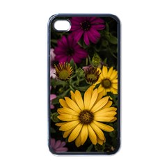 Beautiful Colourful African Daisies  Apple Iphone 4 Case (black)