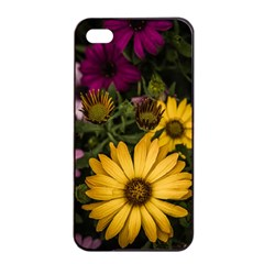 Beautiful Colourful African Daisies  Apple iPhone 4/4s Seamless Case (Black)