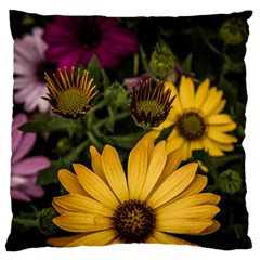 Beautiful Colourful African Daisies  Large Cushion Cases (One Side)