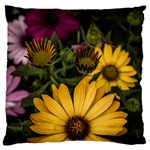 Beautiful Colourful African Daisies  Large Cushion Cases (Two Sides)  Back