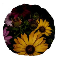 Beautiful Colourful African Daisies  Large 18  Premium Round Cushions