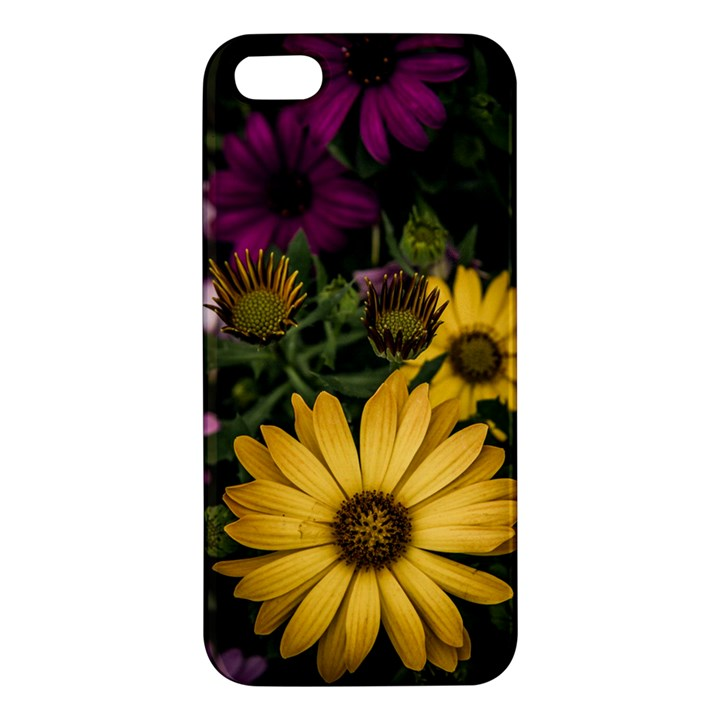 Beautiful Colourful African Daisies  Apple iPhone 5 Premium Hardshell Case
