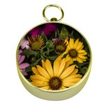 Beautiful Colourful African Daisies  Gold Compasses Front