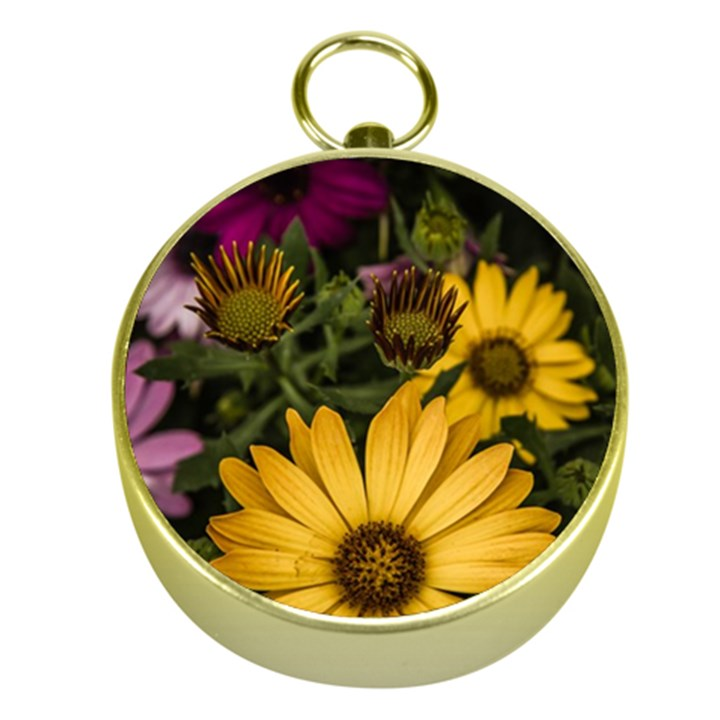 Beautiful Colourful African Daisies  Gold Compasses