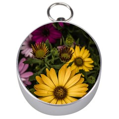 Beautiful Colourful African Daisies  Silver Compasses
