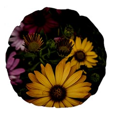 Beautiful Colourful African Daisies  Large 18  Premium Flano Round Cushions