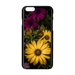 Beautiful Colourful African Daisies  Apple iPhone 6/6S Black Enamel Case