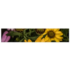 Beautiful Colourful African Daisies  Flano Scarf (small)