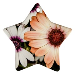 Beautiful Colourful African Daisies Ornament (Star)