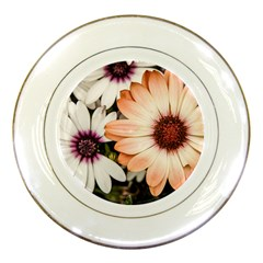Beautiful Colourful African Daisies Porcelain Plates