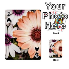 Beautiful Colourful African Daisies Playing Cards 54 Designs