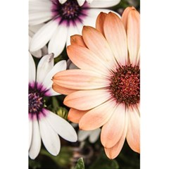 Beautiful Colourful African Daisies 5.5  x 8.5  Notebooks