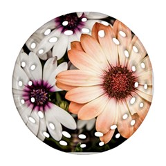 Beautiful Colourful African Daisies Round Filigree Ornament (2Side)