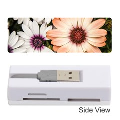 Beautiful Colourful African Daisies Memory Card Reader (stick)