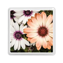 Beautiful Colourful African Daisies Memory Card Reader (Square)